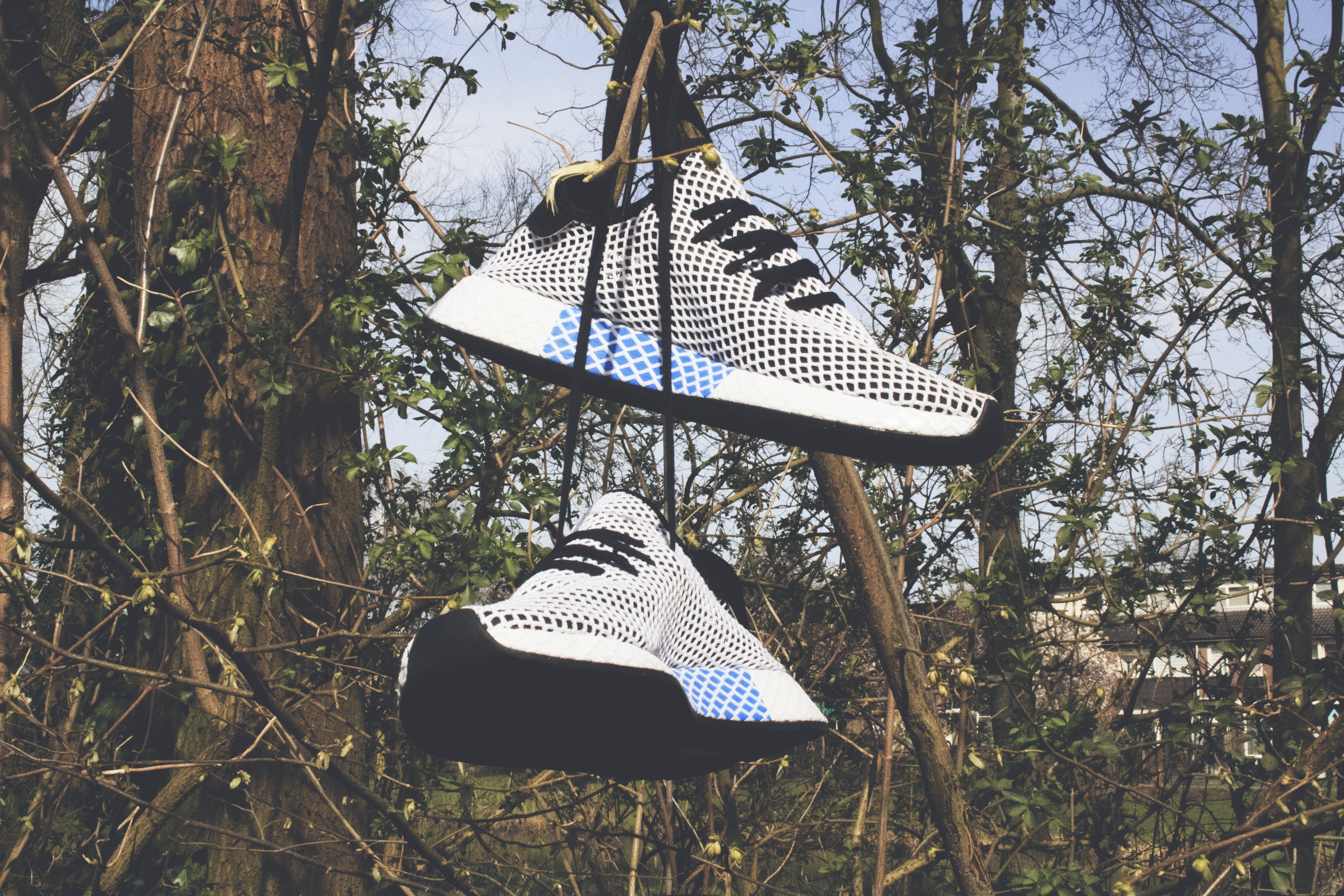 Pair of White Low-top Shoes Hanging on Tree