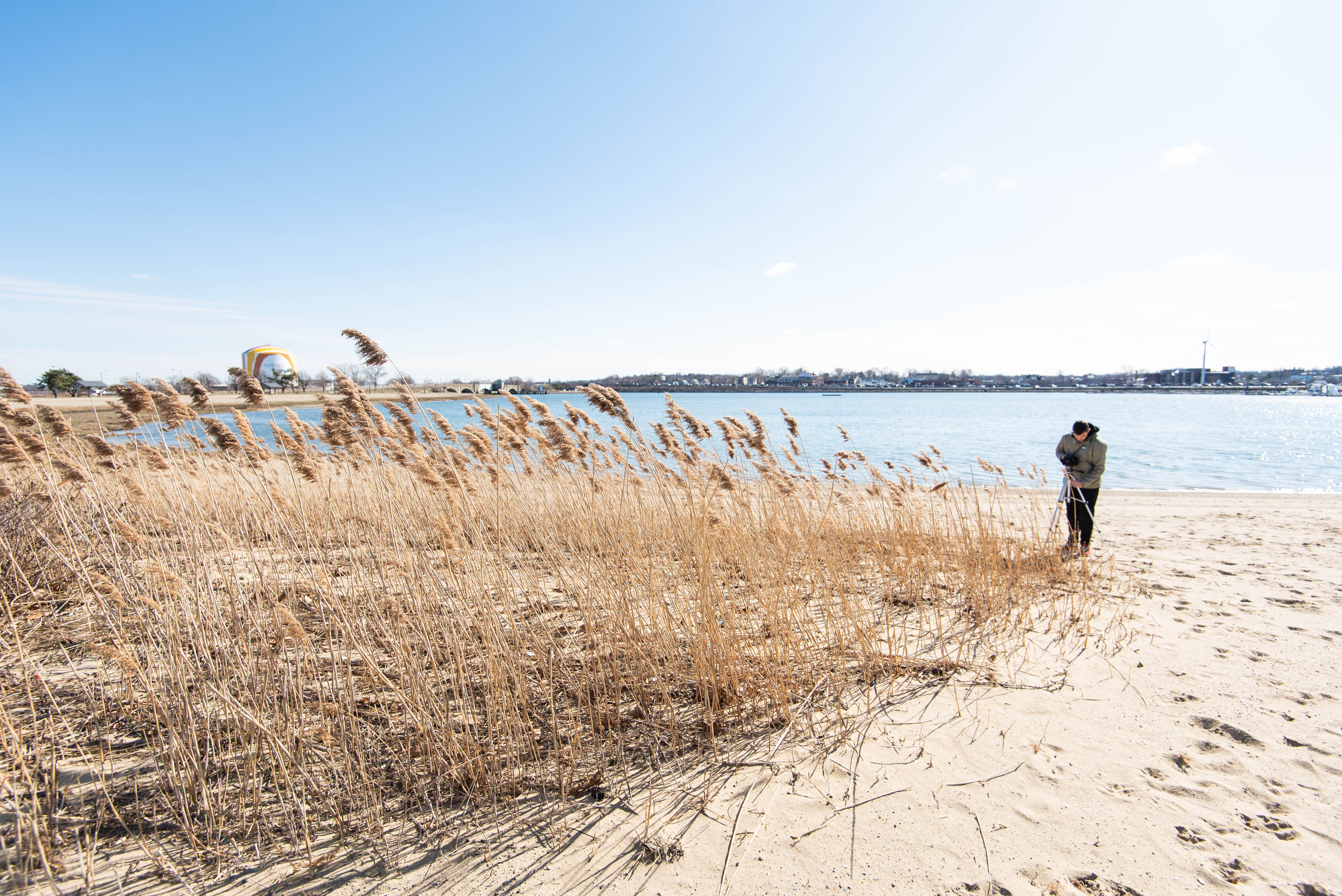 Beach With Brown Grass on Sea With