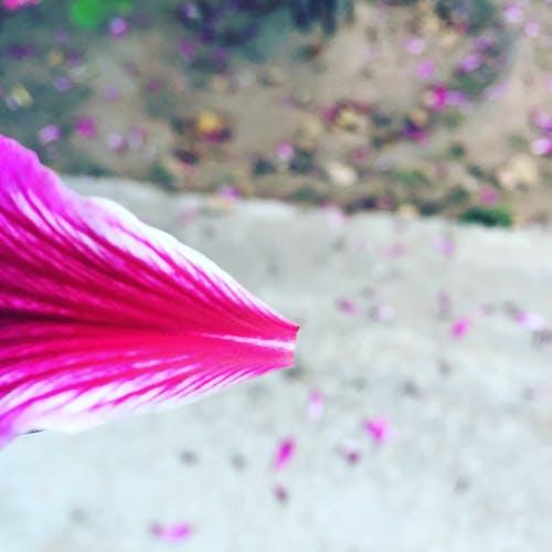 Ảnh lưu trữ miễn phí về # hoa # thiên nhiên # rose_blast # its_for_you