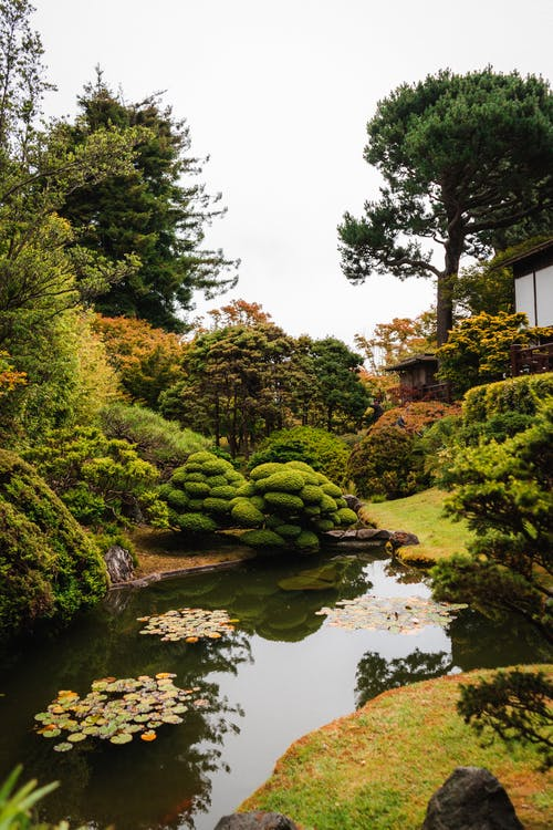 Photography of Beautiful Garden With Pond