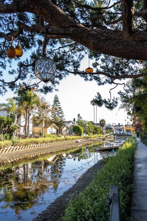 Бесплатное стоковое фото с бассейн, вода, дерево