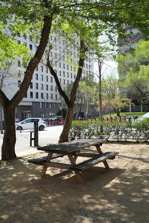 Бесплатное стоковое фото с дерево, деревянный, лето