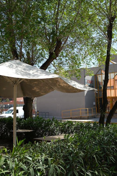 Бесплатное стоковое фото с вода, гостиница, дерево