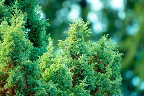 Δωρεάν στοκ φωτογραφιών με δέντρο, περιβάλλον, χρώμα