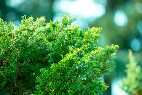나무, 상록수, 환경의 무료 스톡 사진