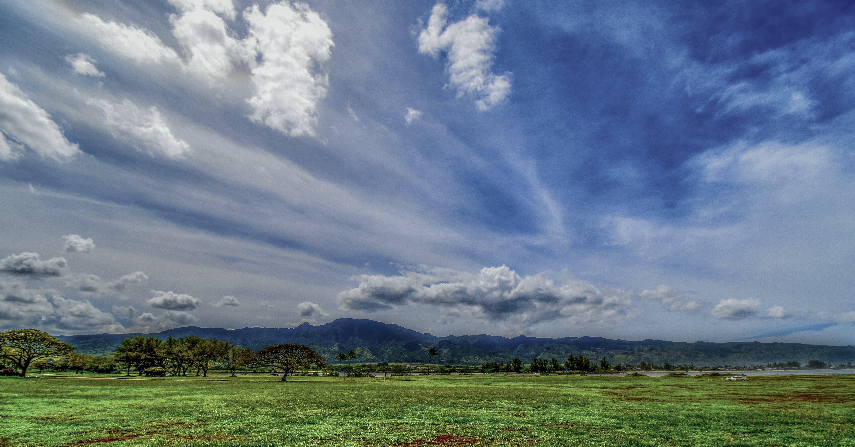 Ingyenes stockfotó fa, felhők, fű, legelő témában