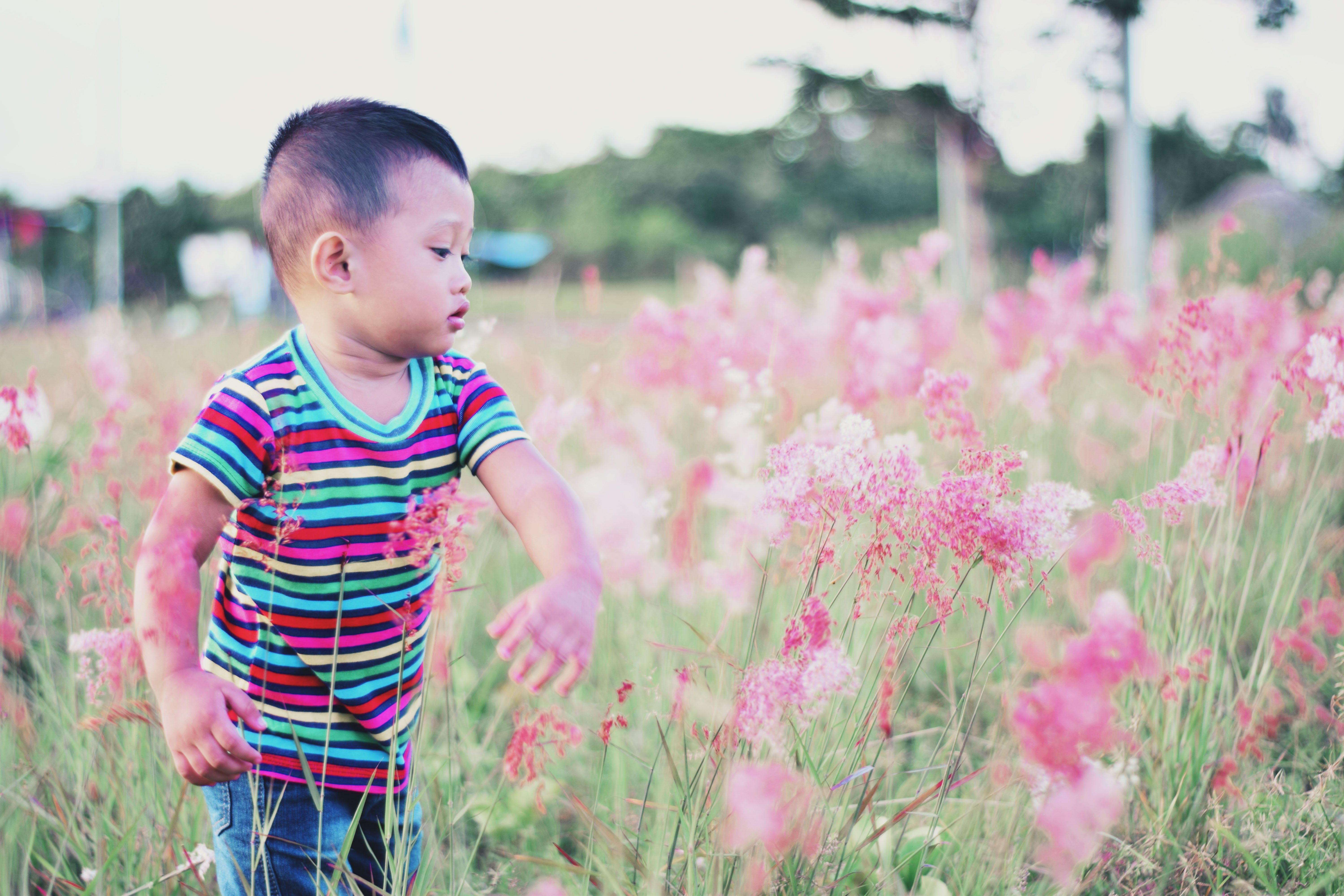 Boy Standing Surrounded by Bed of Red Petal Flower