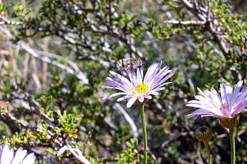 bitki örtüsü, bitkiler, böcek, çiçek içeren Ücretsiz stok fotoğraf