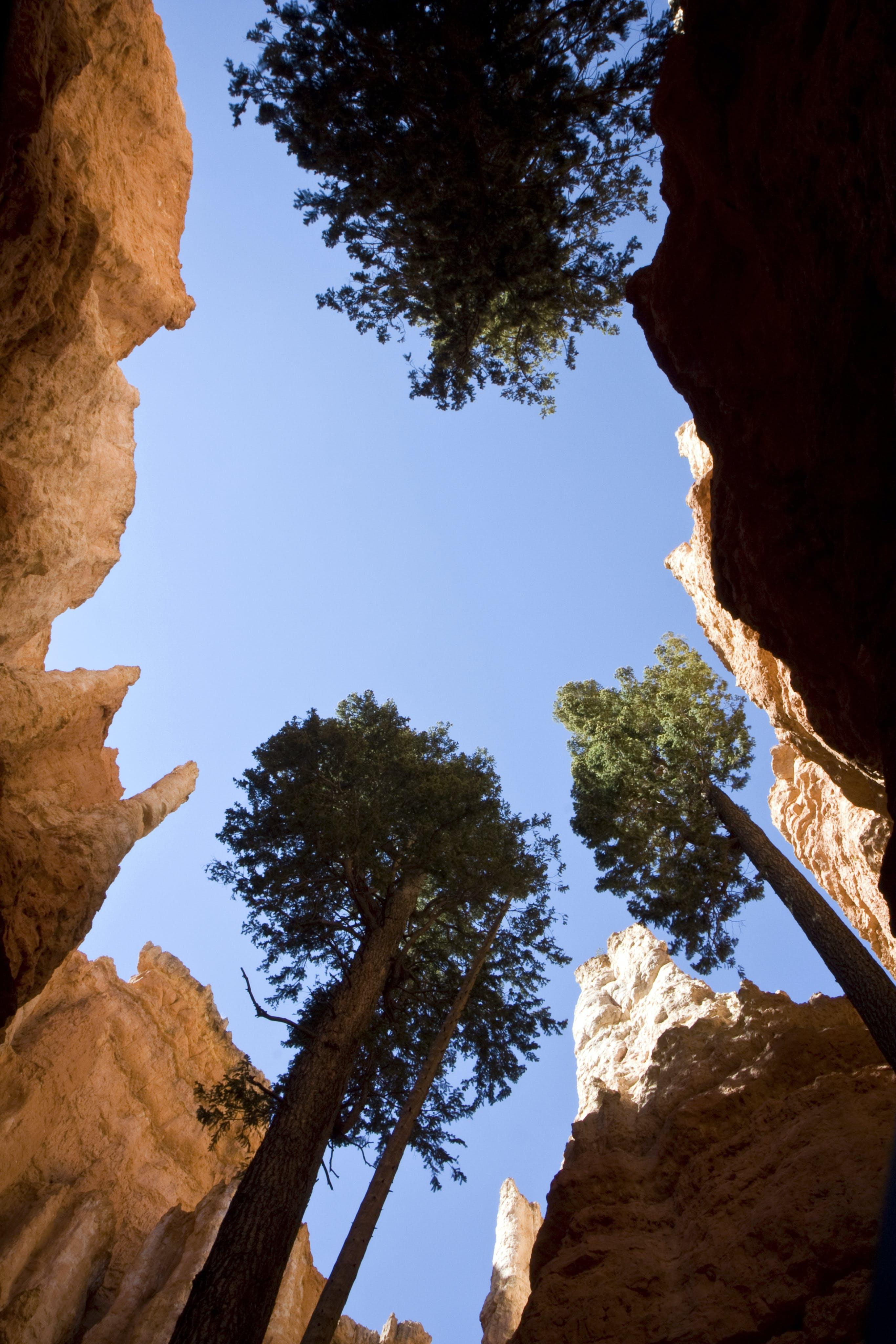 abenteuer, aufnahme von unten, bäume