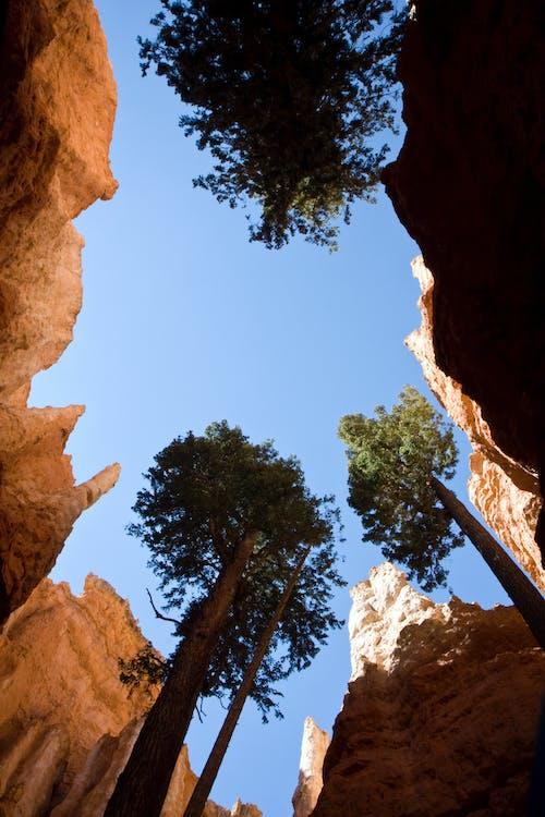 Gratis arkivbilde med blå himmel, bryce canyon, canyon, dagslys