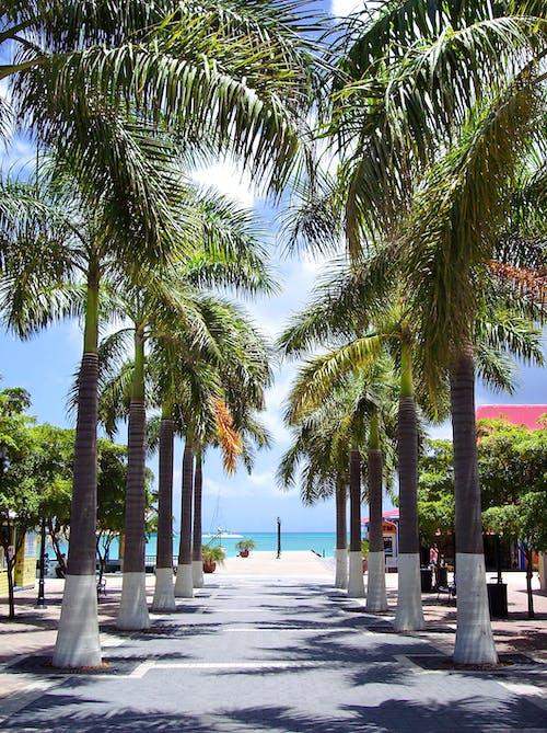 Foto profissional grátis de árvores, caminho, caribe, ensolarado