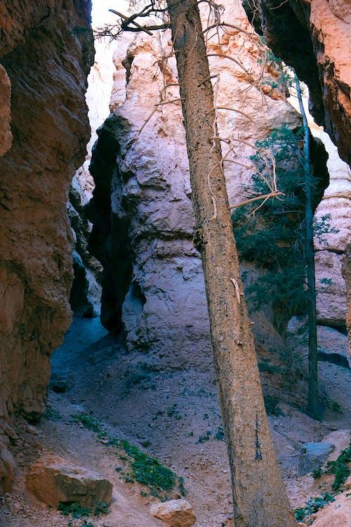 Imagine de stoc gratuită din arbore, aventură, bryce canyon parc național, buștean