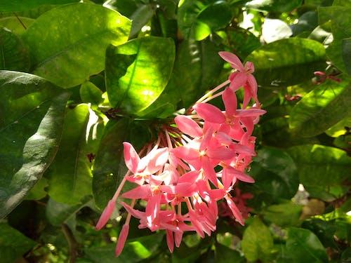 Foto d'estoc gratuïta de flor, flora, florir, flors