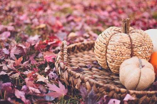 Immagine gratuita di artificiale, autunno, campo