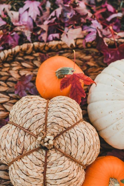 Immagine gratuita di arancia, arancione, autunno