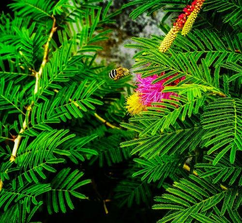 Gratis lagerfoto af bi, insekt, plante