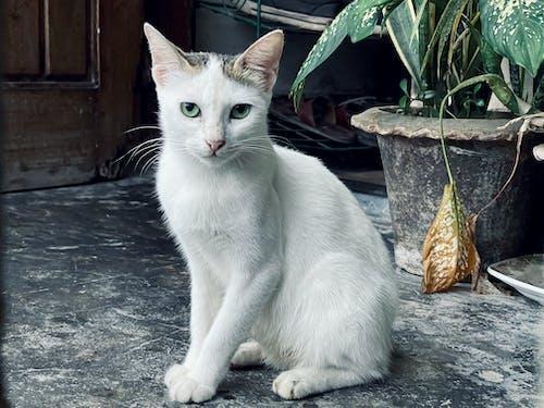 ネコ, 可愛い猫, 猫の背景の無料の写真素材