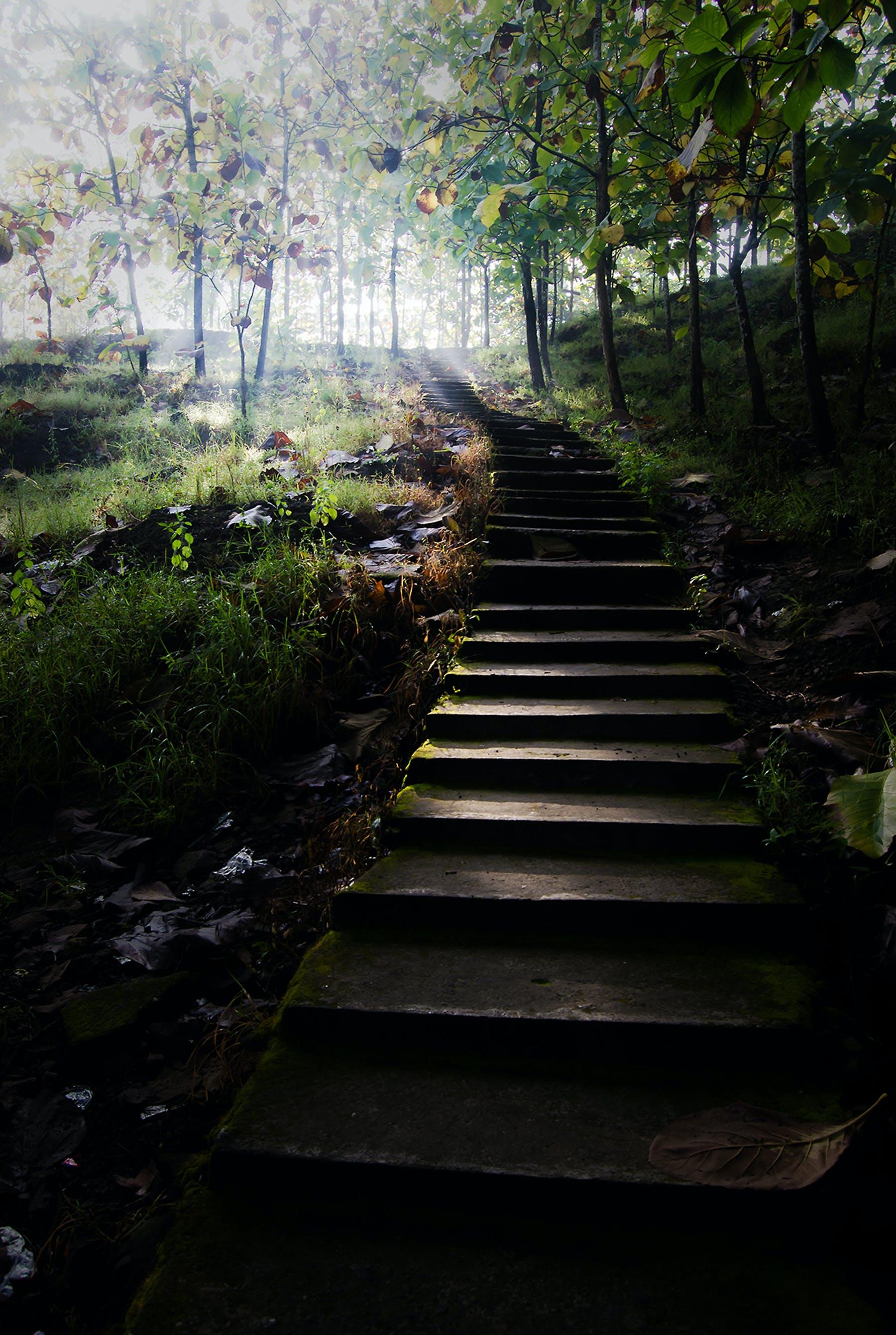açık, adım atmak, ağaçlar, Bahçe içeren Ücretsiz stok fotoğraf