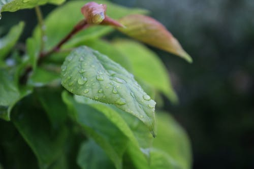 Shallow Focus Photography of Leaf With Water Droplets
