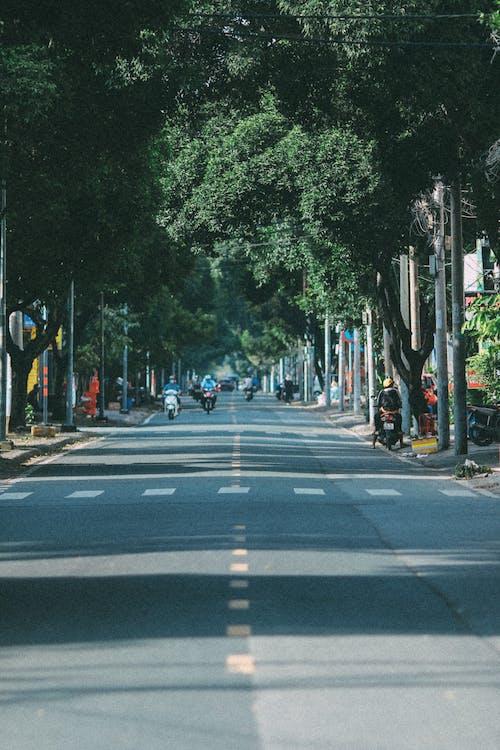 Ảnh lưu trữ miễn phí về cây, đường, đường phố