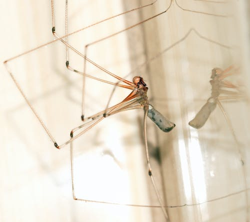 Fotos de stock gratuitas de animal, arácnido, araña, araña de bodega