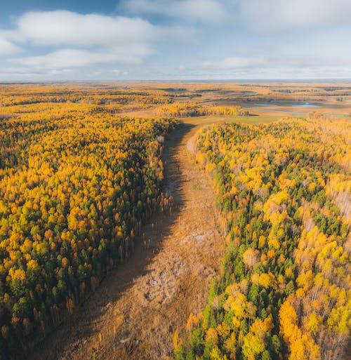 Kostenloses Stock Foto zu bäume, fußweg, gelb