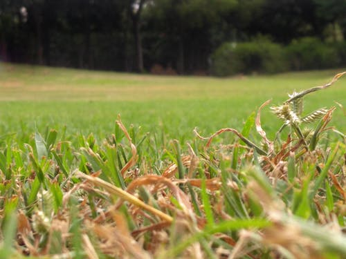 Free stock photo of adorable, city, dry grass, grass