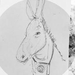 Street Donkey