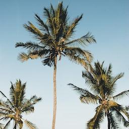 Mwabonje