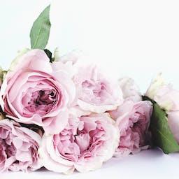 デコレーション バラ バラの花びらの無料の写真素材