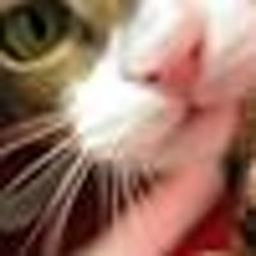 Kam C Cat