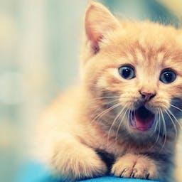セーター ネズミ ペットの無料の写真素材