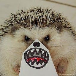 Miss Hedgehog