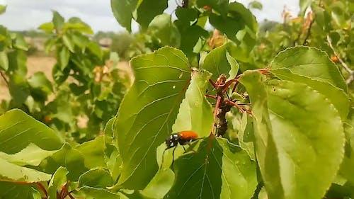 A Beetle On A Leaf