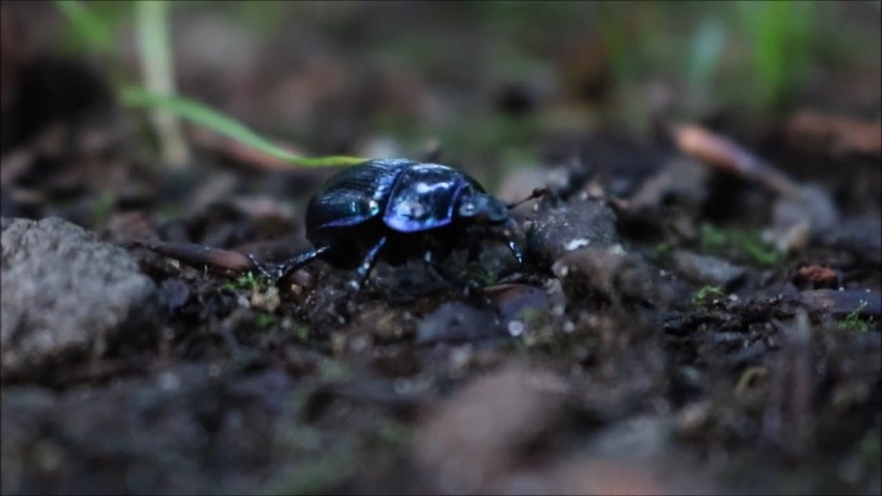 Close-Up Video Of A Beetle
