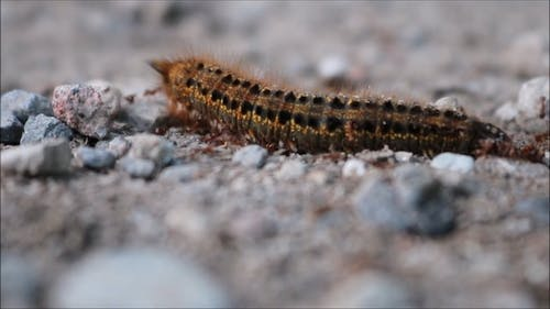 Dead Caterpillar With Ants All Over