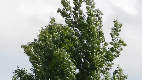 Tree Swaying With The Wind