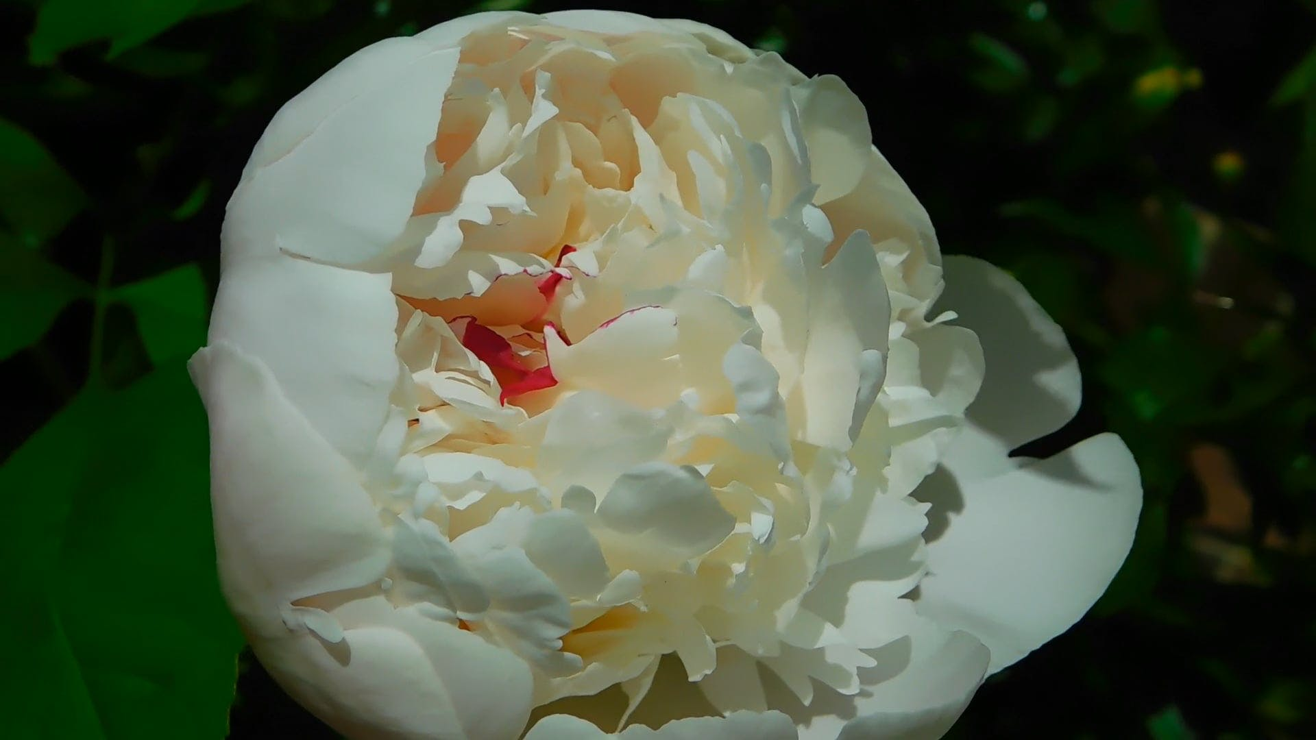 Close-up Shot Of White Flower