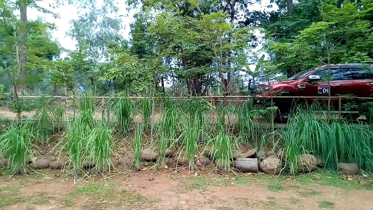 Video Of Building Surrounded With Plants