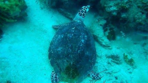Turtle Under The Sea