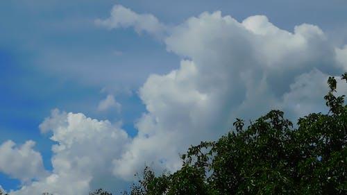 Plants Under Cumulus Clouds