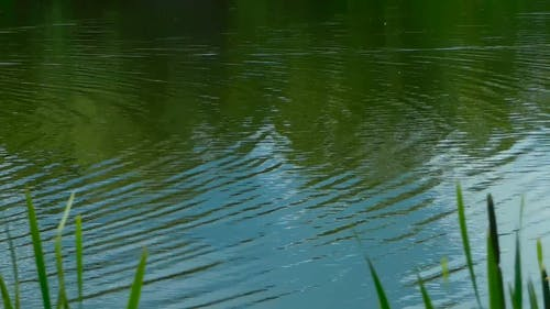 Video Of Ripples of Water