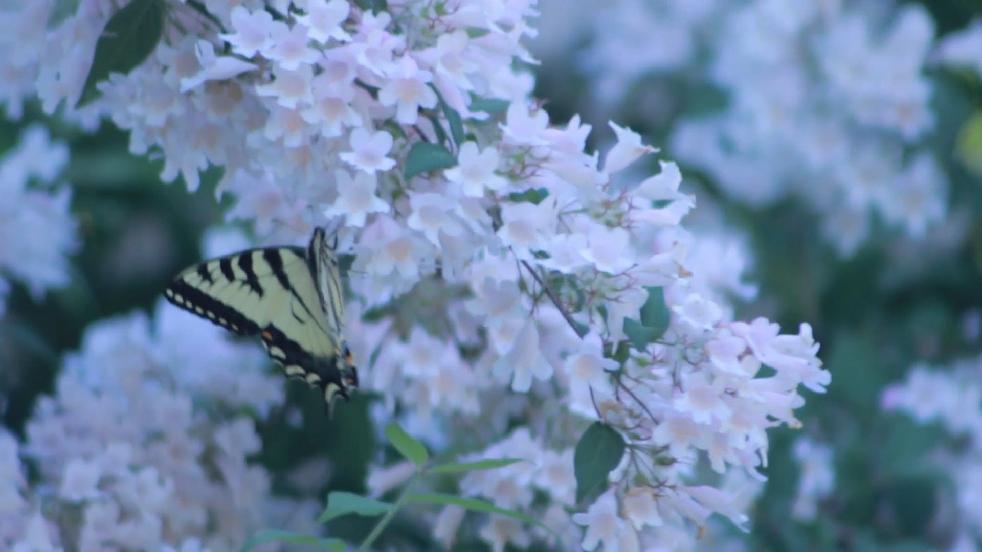 Close-Up Video of Butterfly Perched on Flower