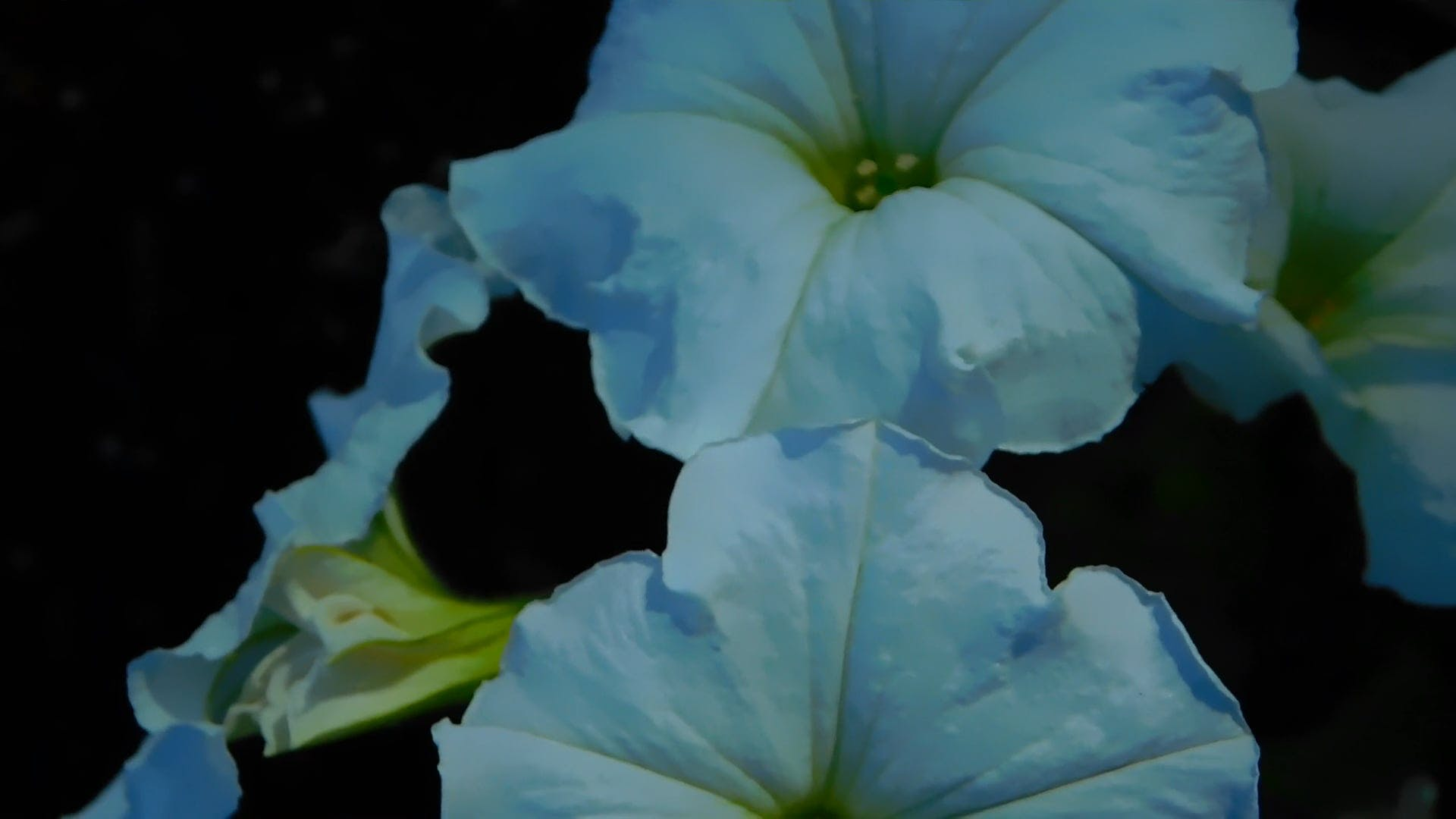 Close-Up Video Of White Flower