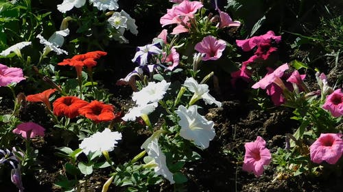 Assorted Colored Flowers