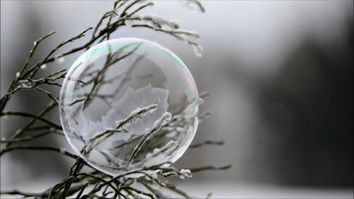 Close-Up Video Of A Bubble