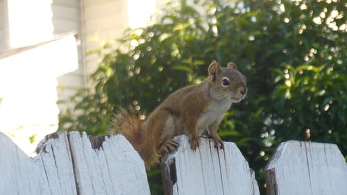 Close-Up Video Of Squirrel on Wood