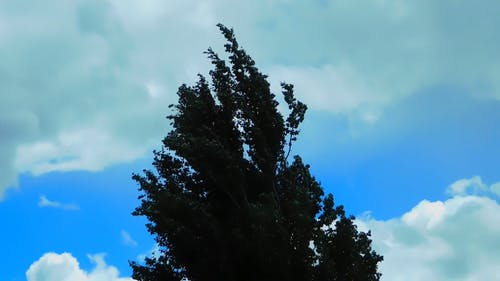 Video Of Tree On Windy Day