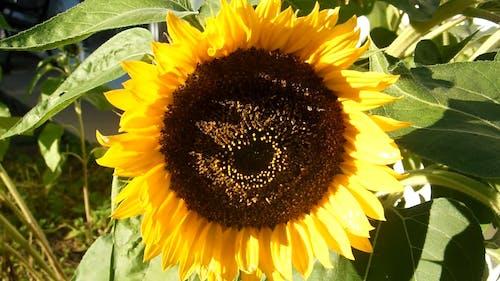 Close-Up Video Of Sun Flower