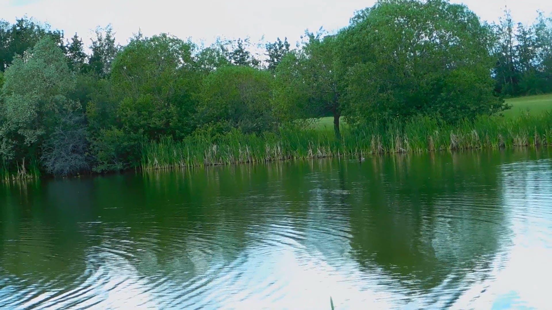 Video of Lake During Daytime